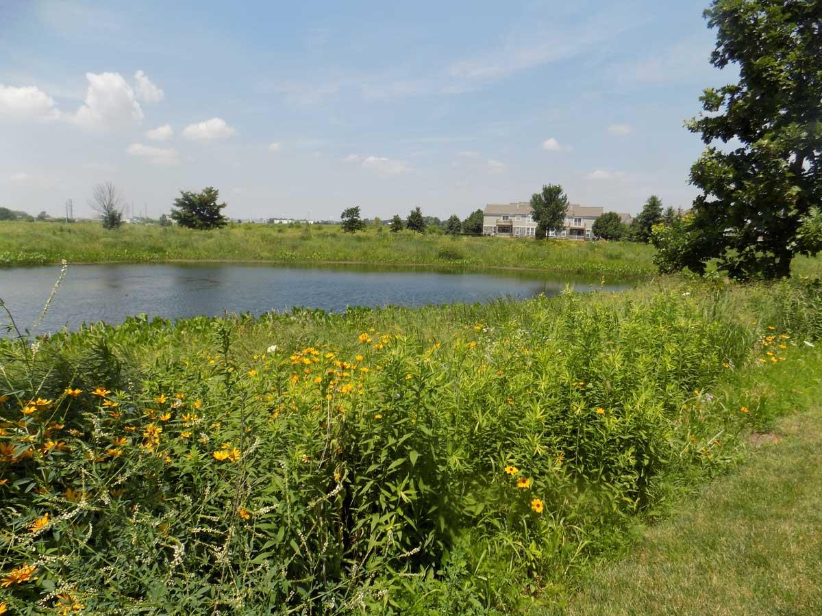Hawthorn Woods, IL Prairie Restoration