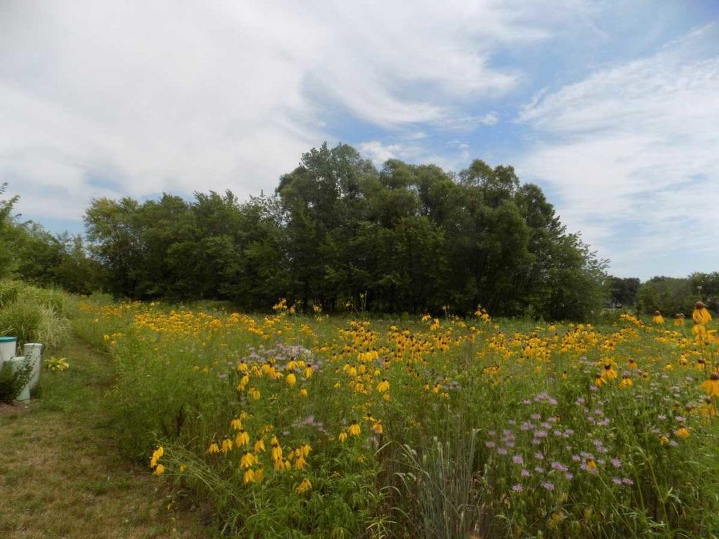 Hawthorn Woods, IL Prairie Restoration Company