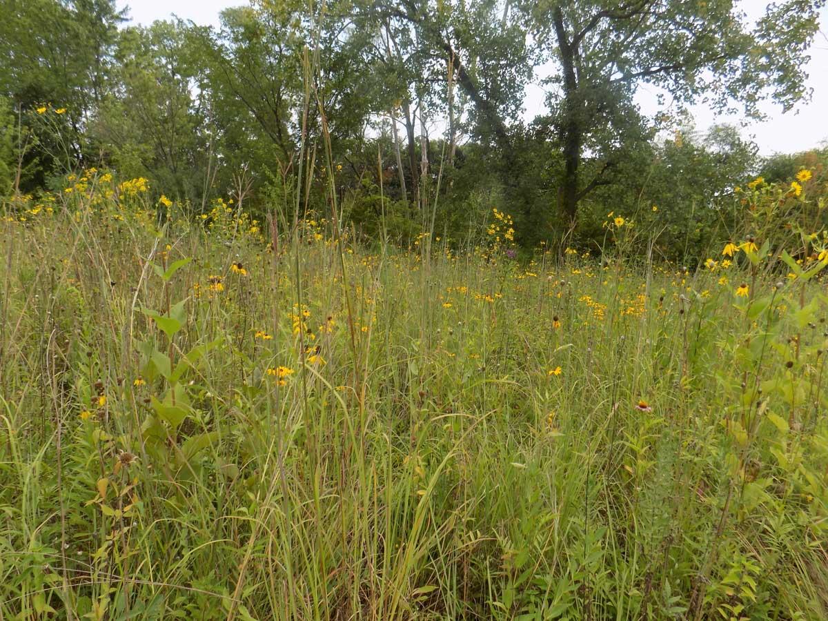 Hawthorn Woods, Illinois Prairie Restoration