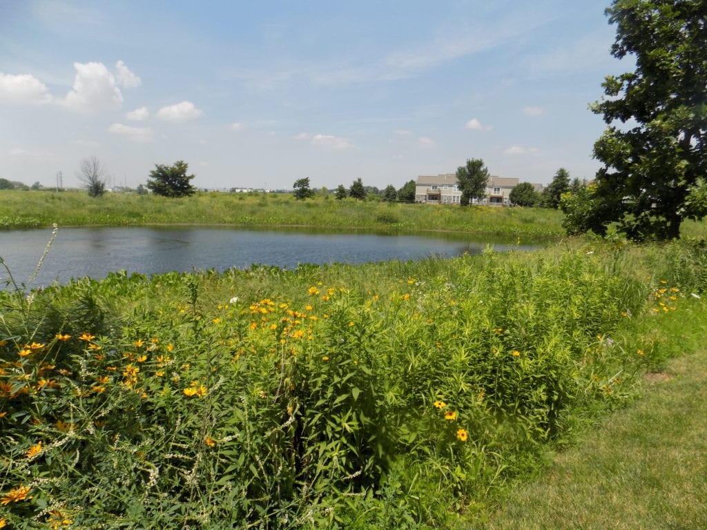 Lake Zurich, Illinois Prairie Restoration