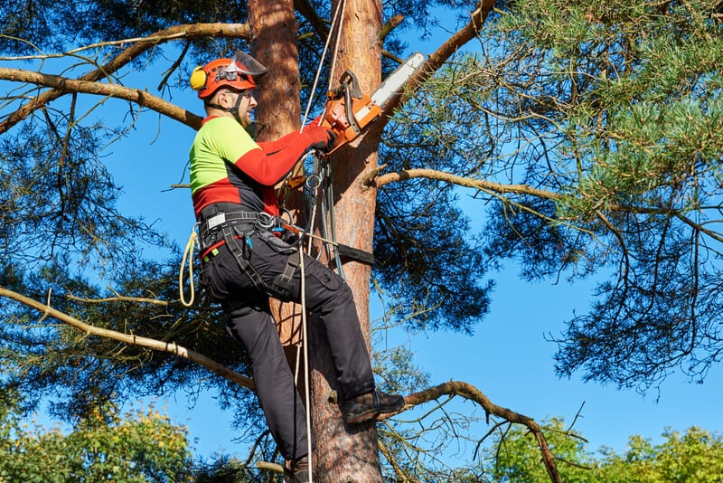 Barrington, Illinois Tree Care