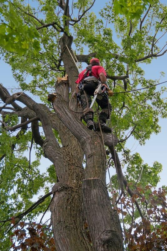 Lake Zurich, Illinois Tree Care Services